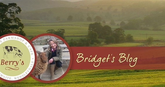 BRIDGET'S JULY BLOG